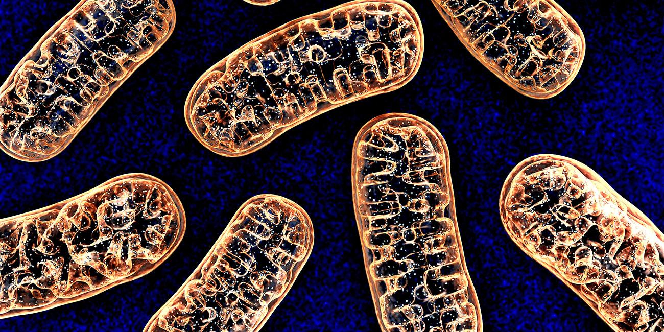 Gut parasites, Designs for Health