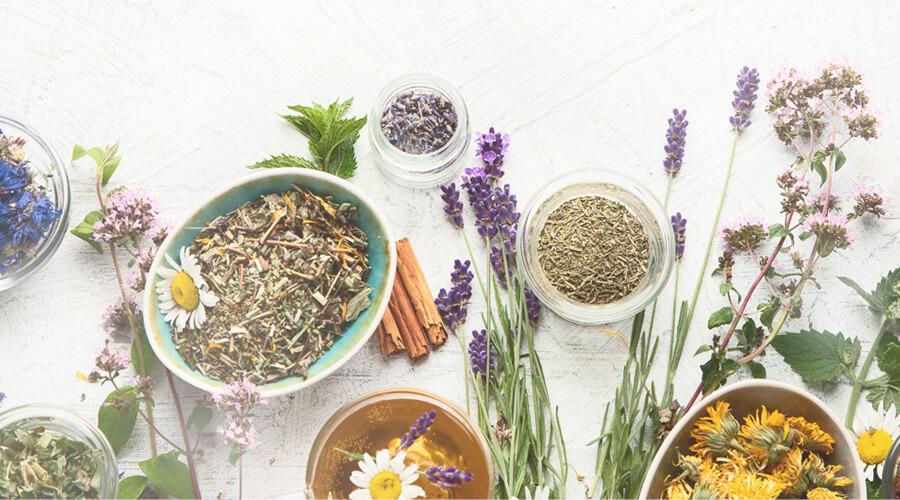 botanical-medicine-antibiotic-resistance
